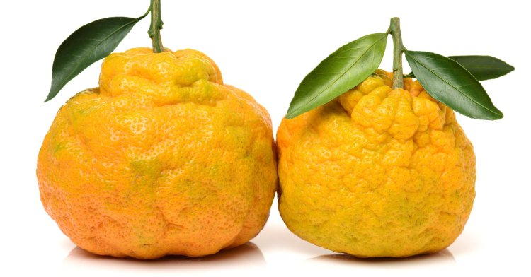 ugly tangerine on a white background